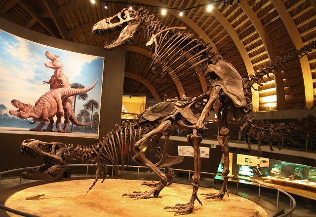 1280px-MUJA-Tyrannosaurus
