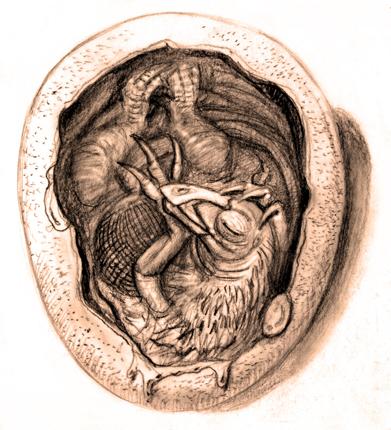 Therizinosaur eggB