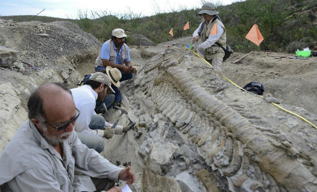 CORRECTION_Mexico_Dinosaur_Tail__systems@deccanmail