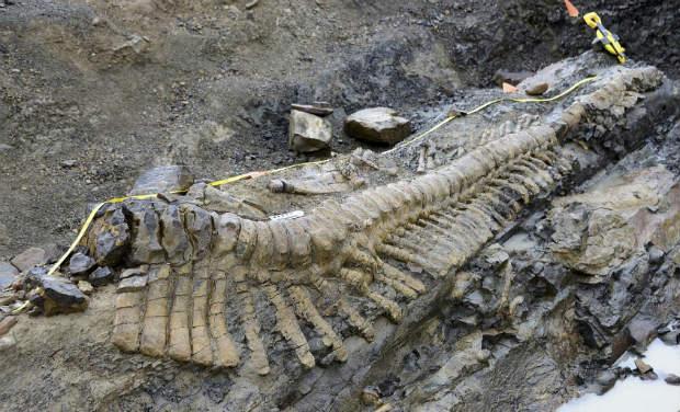 dinosaur tail.jpg_0_0