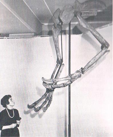 deinocheirus_claws_web