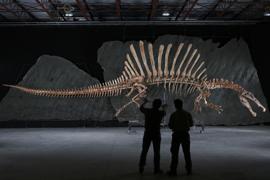 Spinosaurus_Inline
