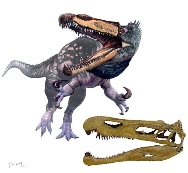 Suchomimus F