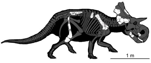 Yehuecauhceratops mudei NEW ver-2 with skeleton.jpg