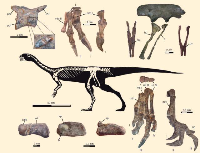 image_2739_2e-Chilesaurus-diegosuarezi.jpg