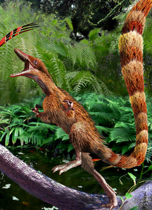 Yi Qi and Sinosauropteryx New copy 3