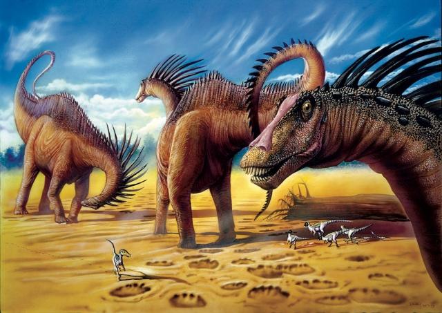 186.Amargasaurus copy.jpg